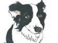 Polly the Collie Dog Portrait by Sophy Nixon 2016 (2)