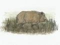 The Brancepeth Boar by Sophy Nixon 2016 Secret Durham