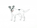 Sketch-a-pet by Sophy Nixon 2017